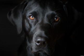 o-BLACK-DOG-facebook